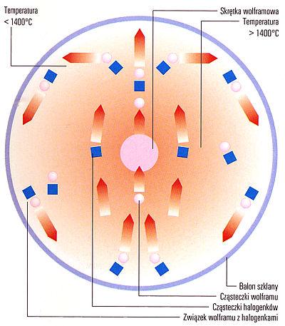 Efekt halogenowy - schemat efektu halogenowego zachodzącego wlampie